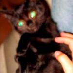 jaap de miauw 14-08-2006
