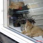 De jonge katjes van de overbuurvrouw 11-08-2007