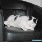 Kat Snowball 19-04-2011