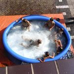 zwem paradijs rozenstraat 17-08-2005